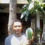 Kisah Warga Ponorogo Kembangkan Mangga Kiojay