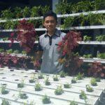 Pemuda Ponorogo Sukses Kembangkan Hidroponik