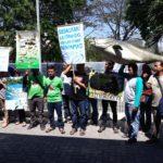 Ecoton Desak Sanksi Hukum Pemilik Ikan Arapaima yang Dilepasliarkan