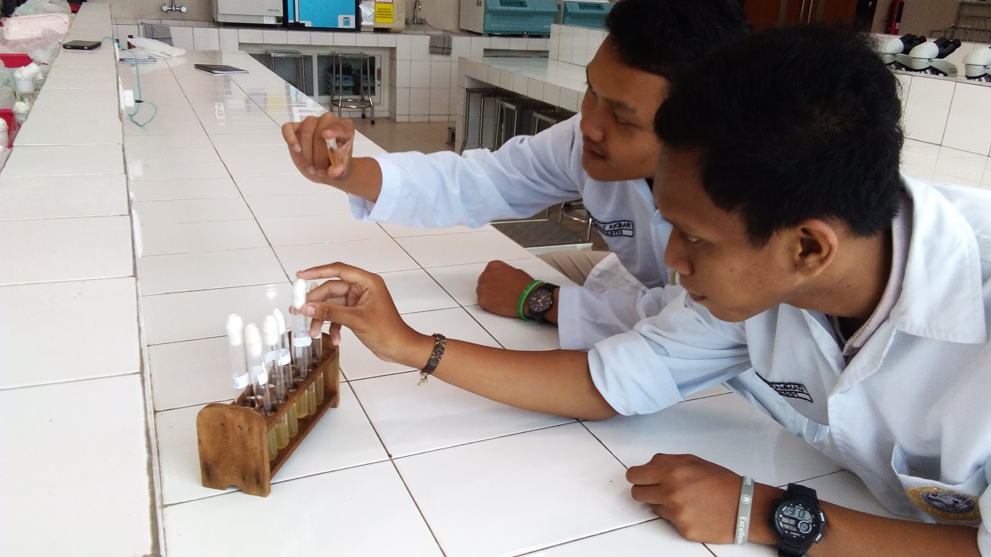 CICI-Kit, Antibiotik Alami untuk Bakteri Ikan Gurami