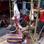 Rayakan Idul Adha, DPD PDIP Jatim Kurban 5 Sapi dan 2 Kambing