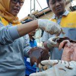 Dinas Ketahanan Pangan dan Peternakan Kabupaten Kediri Temukan Penyakit Cacing Hati Pada Kambing Kurban