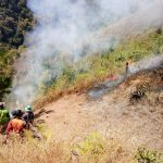 KPH Kediri Lakukan Penanganan Kebakaran Hutan di Gunung Wilis