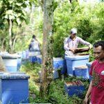 Musim Penghujan, Peternak Lebah Kesulitan Produksi Madu