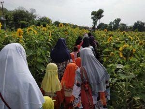 Bermain dan Belajar di Kebun Bunga Matahari, Spot Baru Wisata Alam dan Pendidikan di Kota Kediri