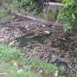 Ribuan Ikan Mati di Sungai Kresek Kediri, Warga Keluhkan Bau Tak Sedap