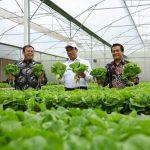 Awali Tahun 2019, Kementan Genjot Ekspor Sayuran