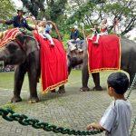 Libur Nyepi, Ribuan Pengunjung Padati KBS