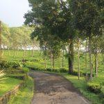 Menikmati Keindahan Alam Kebun Teh Wonosari Lawang