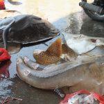 Maraknya Perdagangan Satwa Ilegal Ancam Populasi Satwa Laut yang Dilindungi