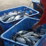 Praktek Pencurian Ikan Illegal Rugikan Negara Triliunan Rupiah