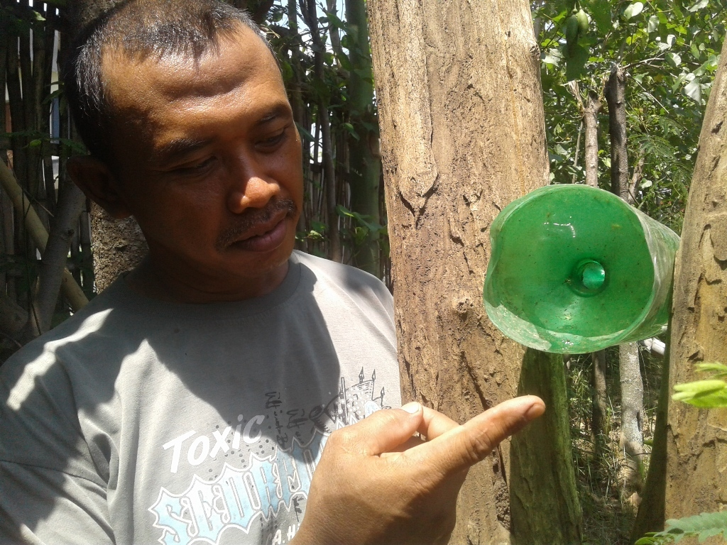 Petani Jeruk di Ponorogo Antisipasi Serangan Hama Lalat Buah