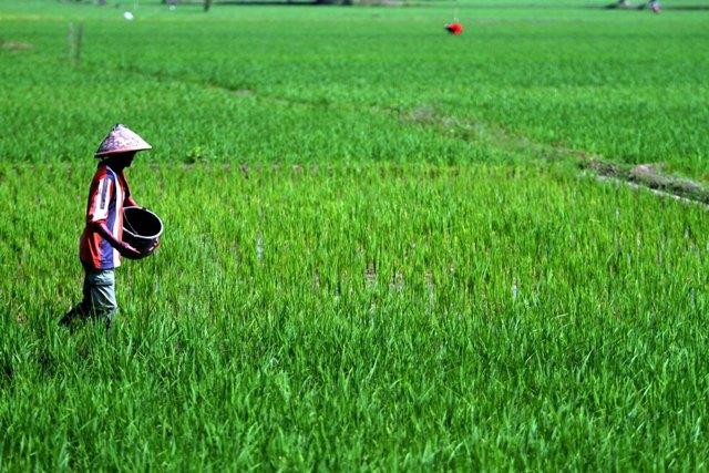 Presiden Dorong Korporasi Petani dan Nelayan Guna Wujudkan Transformasi Ekonomi