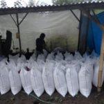 Petani di Banyuwangi Mampu Produksi 3.000 Sak Pupuk Organik