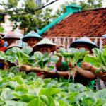 Meski Lahan Sempit, Hasilkan Produk Pertanian Pakai Sistem Hidroponik