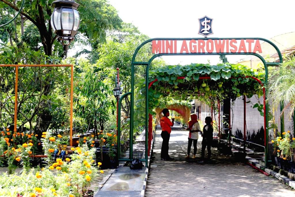 Mini Agrowisata Pagesangan Andalan Baru Tempat Wisata Dan