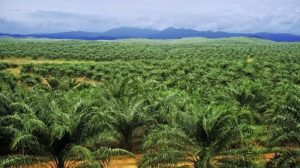 Industri Sawit Ikut Menopang Perekonomian Indonesia