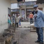 Cegah Perdagangan Daging Anjing dan Kucing, DMFI Surati Pemerintah RI