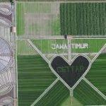 Crop Circle Buatan Kelompok Petani Kediri
