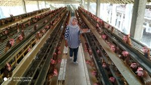 Harga Ayam Sayur Turun, Harga Telur Melambung