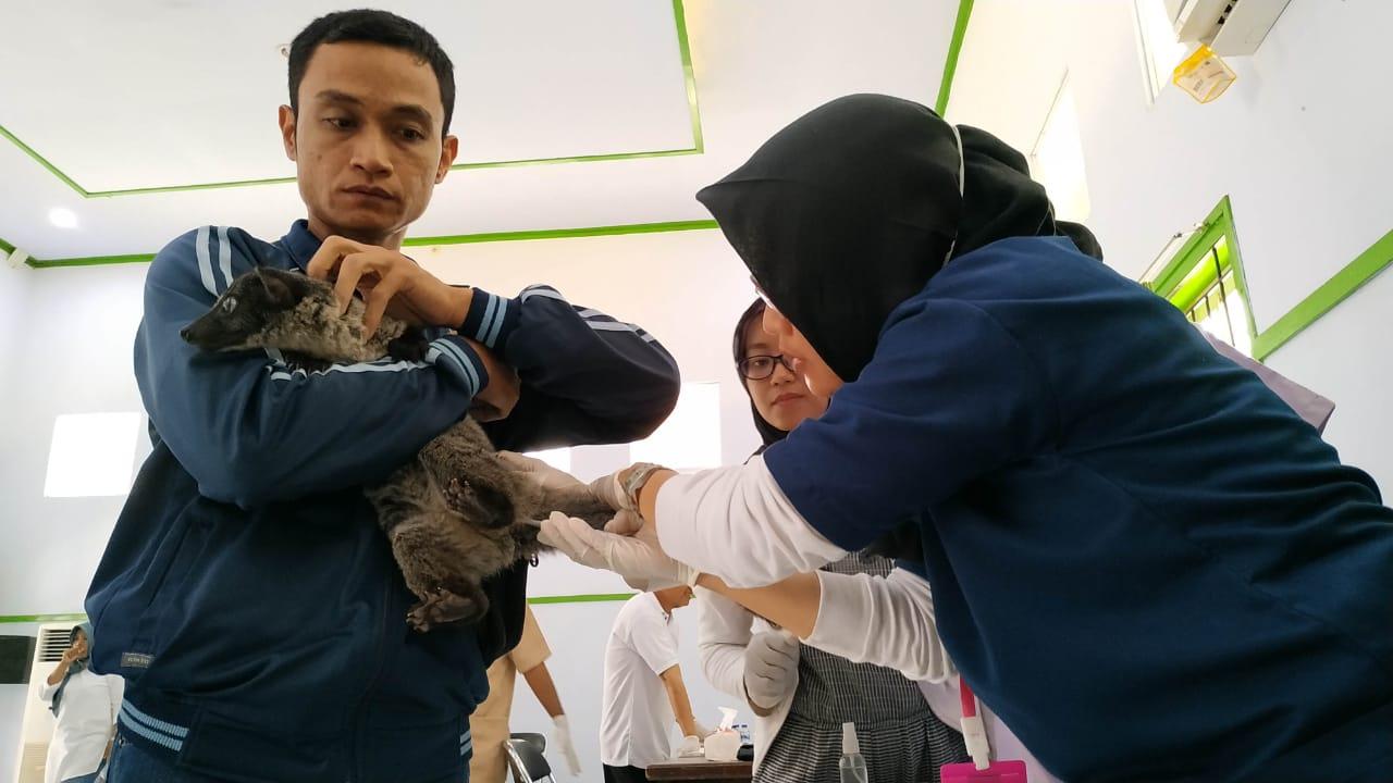 Vaksinasi Rabies pada Ratusan Hewan