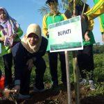 Kabupaten Kediri Terus Lakukan Penghijauan untuk Atasi Krisis Air dan Longsor