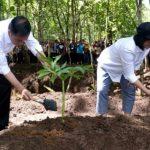 Presiden Ajak Masyarakat Pulihkan Hulu DAS dengan Agroforestri