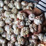 Agatha : Saatnya Jatim Dorong Para Petani Giat Menanam Bawang Putih