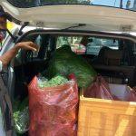 Komunitas Hidroponik Suplai Sayuran ke Lingkungan Terdampak Isolasi Mandiri
