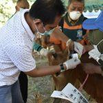DKPP Kota Surabaya Mulai Lakukan Pemeriksaan Kesehatan Hewan Kurban