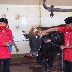 PDI Perjuangan Surabaya Bagikan Daging Kurban dari Rumah ke Rumah