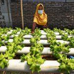Erma Susanti Ajak Masyarakat Kembangkan Urban Farming