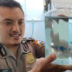 Berawal Hobi, Raup Jutaan Rupiah dari Jual Beli Ikan