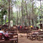 Sensasi Kongkow Dikawasan Hutan Pinus Lereng Kaki Gunung Wilis