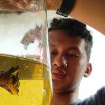 Manfaatkan Waktu Luang, Pelajar di Kediri Budidaya Ikan Cupang dan Kura-kura Brazil