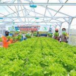 Lampu UV Tingkatkan Produktivitas Tanaman Hidroponik