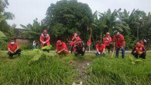 Megawati Ultah, PDI Perjuangan Sidoarjo Tanam 4.874 Bibit Pohon