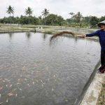 Tanaman Herbal Jadi Solusi Obat Aman untuk Budidaya Ikan