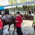 Iduladha, PDI Perjuangan Surabaya: Semangat Pengorbanan Hadapi Pandemi Covid-19