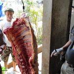 Dinas Pertanian Kota Kediri Temukan 6 Ekor Sapi Terkena Cacing Hati