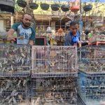 Surga Pecinta Burung di Surabaya
